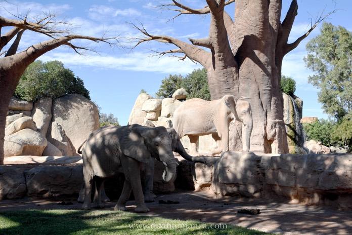 bioparco-elefanti