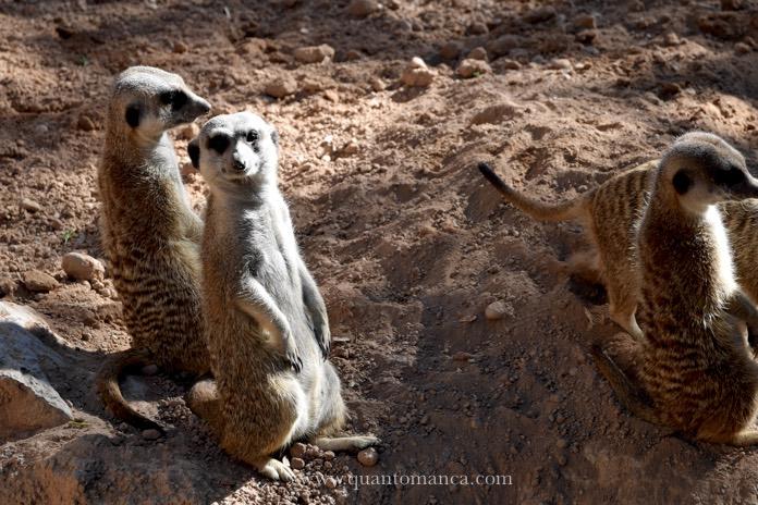 bioparco-lemuri