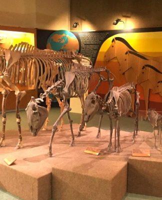 musei toscana bambini