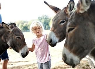 Danimarca - vacanze in famiglia tra natura e animali