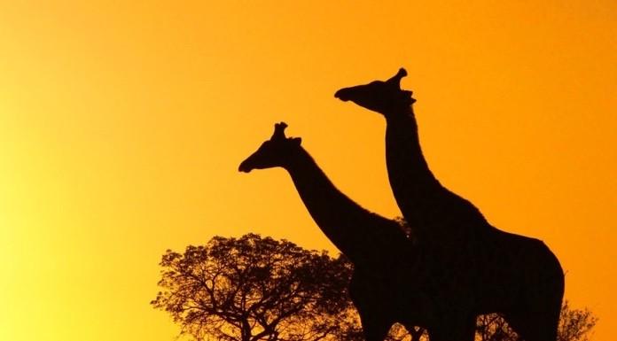 riserve naturali in sud africa