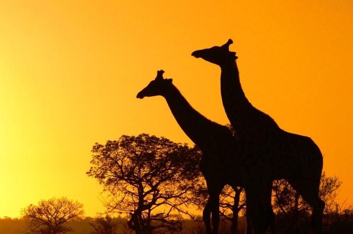 Alla scoperta delle riserve naturali del sudafrica for Sud africa immagini