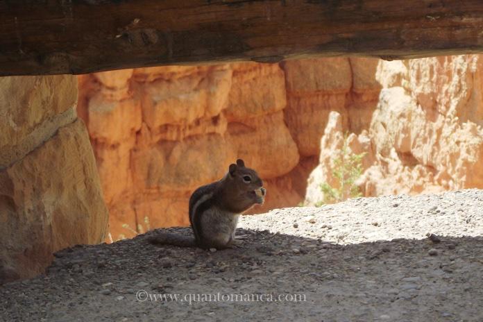 bryce-canyon-scoiattolo