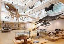 trentino alto adige musei per bambini