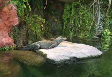 tierpark hellabrun, zoo monaco