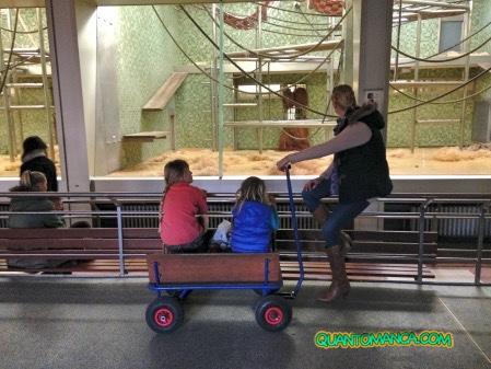 zoo di berlino animali