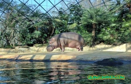 zoo berlino