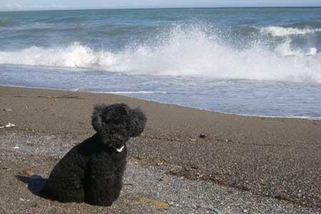 Vacanze con il cane in Liguria