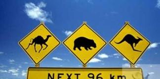 Ecco il nostro Viaggi in Australia e Nuova zelandia con i Bambini dietro