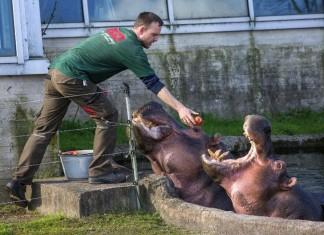 lo zoo di copenhagen - lo zoo per bambini piu grande in europa