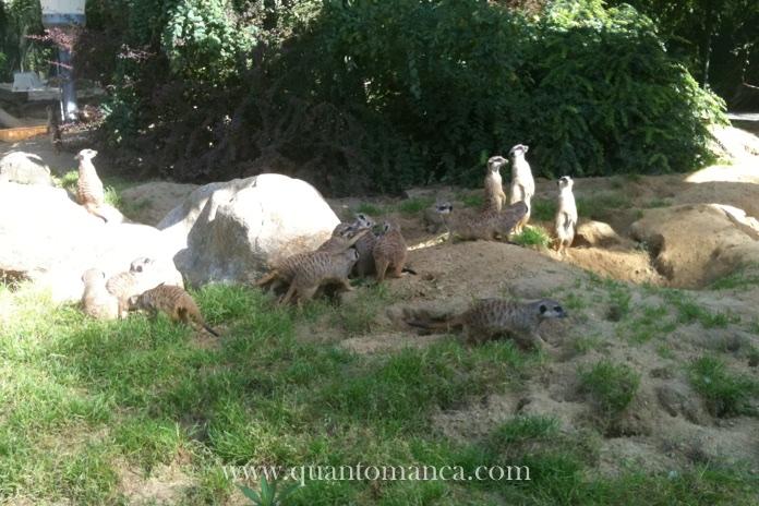 colonia-zoo