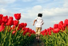 olanda con bambini, itinerari in olanda,
