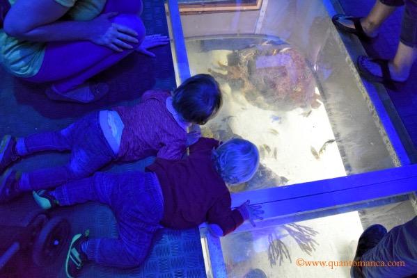 acquario di plymouth