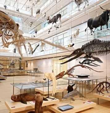 trentino alto adige - musei per bambini