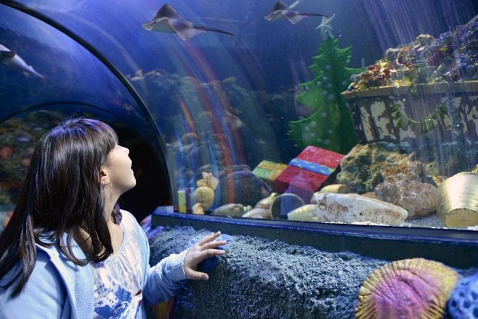 natale-a-gardaland-sea-life-aquarium-12