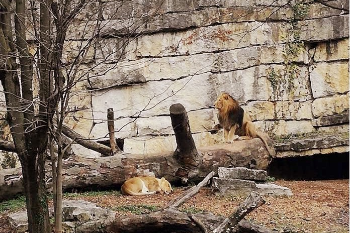 lione zoo