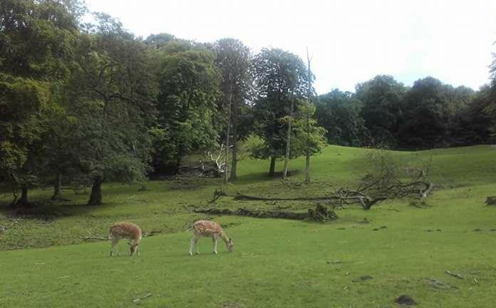 Marselisborg Deer Park