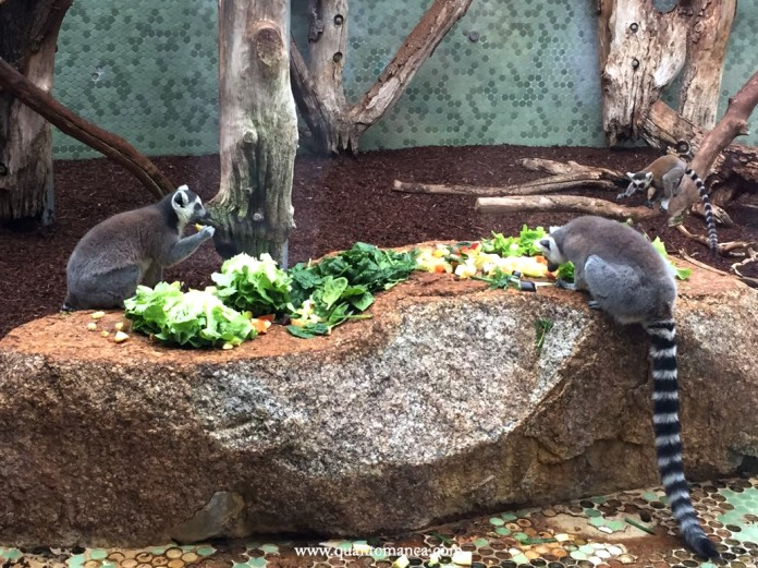 Tierpark Hellabrunn, zoo monaci di baviera