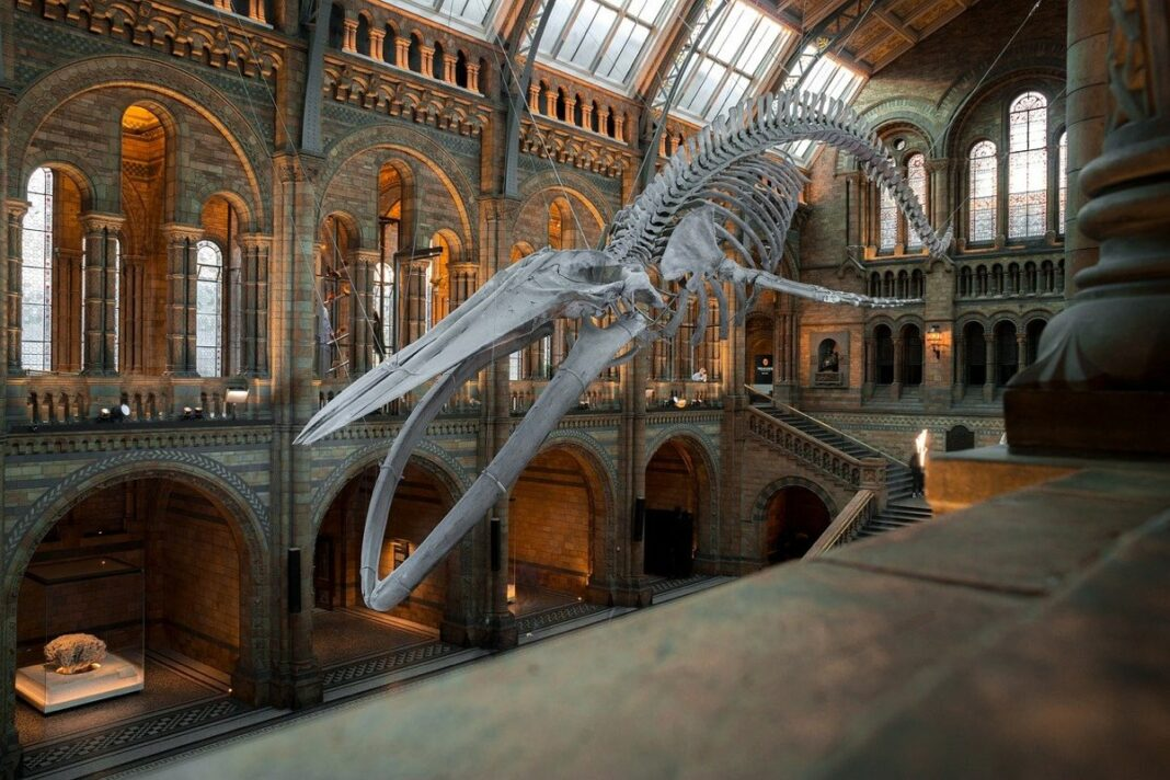 musei londra