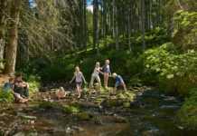 foresta nera con bambini