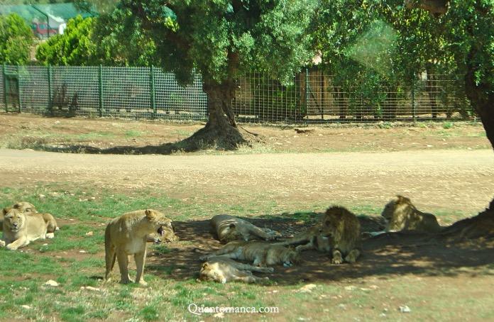fasano zoo safari