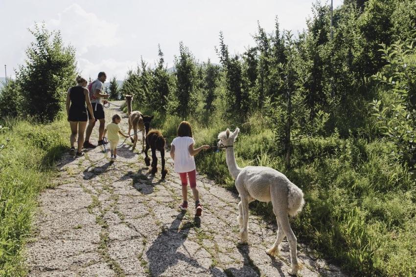 passeggiata con alpaca